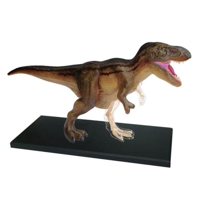 Coffret anatomie T-Rex