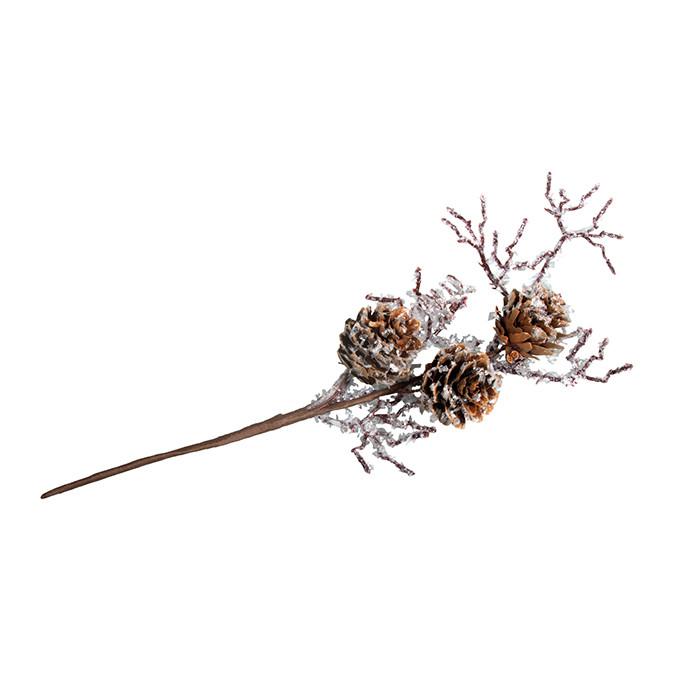 Branche à cônes de mélèze
