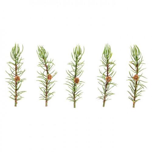 Branches de mélèze avec cônes - 5 pcs