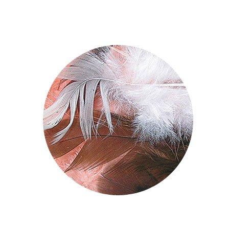 Plumes - Camaïeu marron - 3-10 cm - 10 g