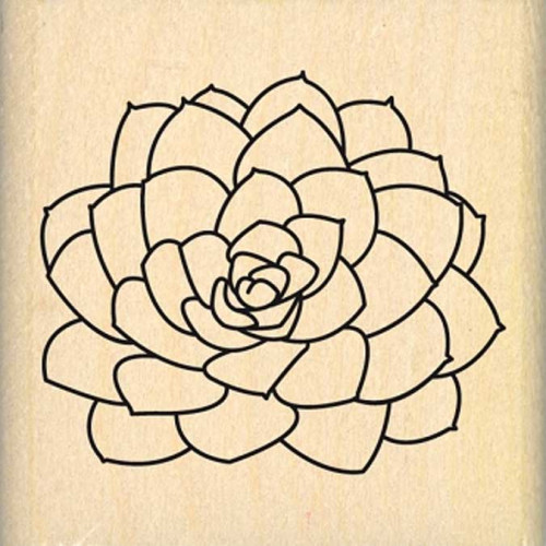 Dakota Valley - Tampon Bois - Petite succulente - 5 x 5 cm